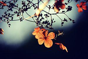 kukka syksy